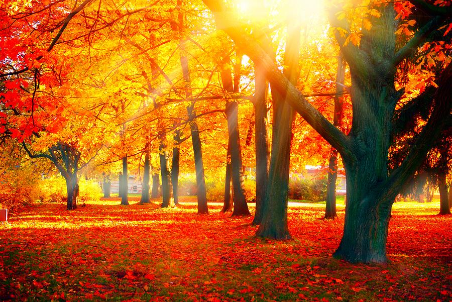 Beautiful autum fall scene